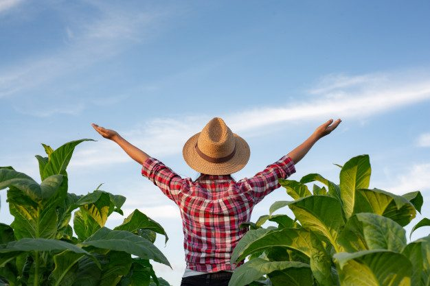 Yeni Başlayanlar İçin Organik Tarım